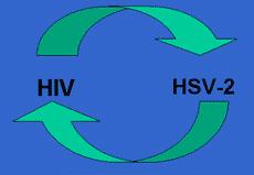ВПГ и ВИЧ